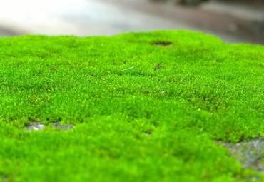 Ученые обнаружили, что зеленый мох может быть полезен для здоровья