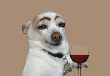 Кто сказал, что собаки обладают исключительным интеллектом?